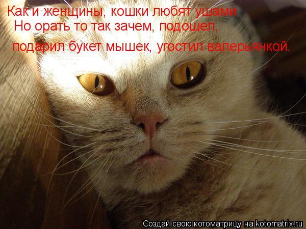 Котоматрица: Как и женщины, кошки любят ушами  Но орать то так зачем, подошел,  подарил букет мышек, угостил валерьянкой…