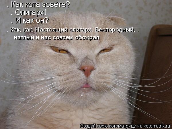 Котоматрица: – Как кота зовёте?  – Олигарх!  – И как он?  – Как, как… Настоящий олигарх. Беспородный, .   наглый и нас совсем обожрал