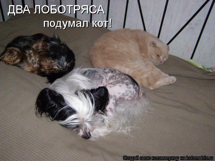 Котоматрица: ДВА ЛОБОТРЯСА подумал кот!