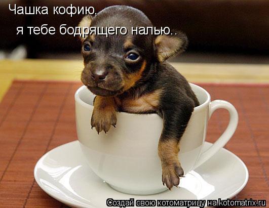Котоматрица: Чашка кофию,   я тебе бодрящего налью..