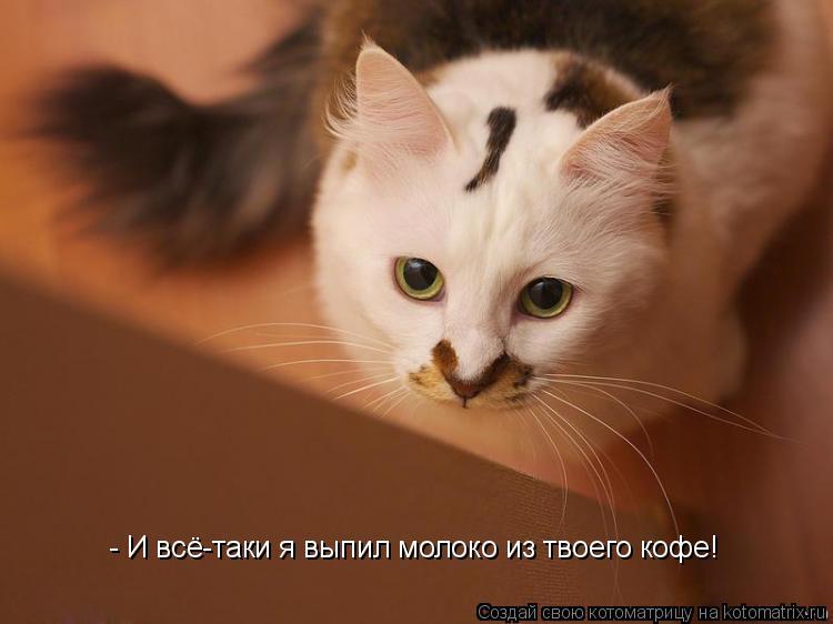 - И всё-таки я выпил молоко из твоего кофе!