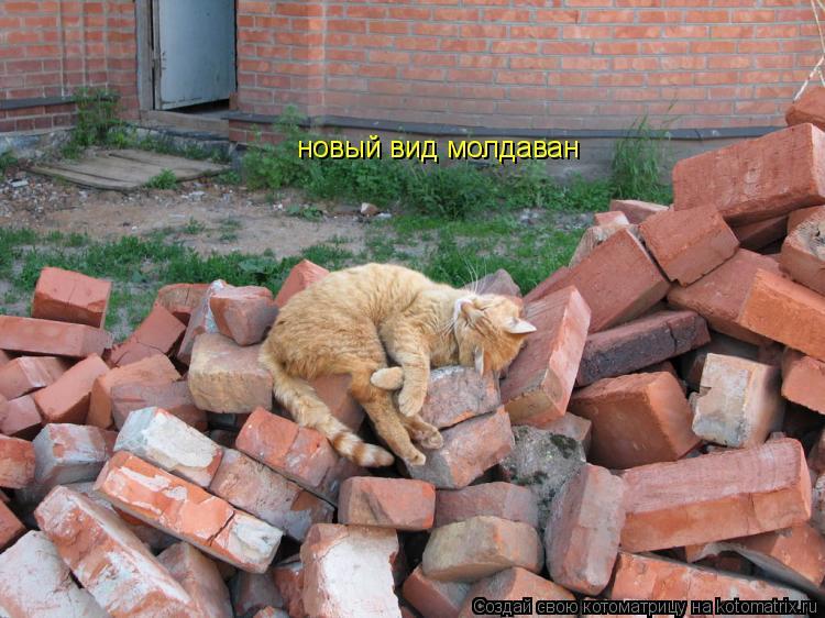 Котоматрица: новый вид молдаван
