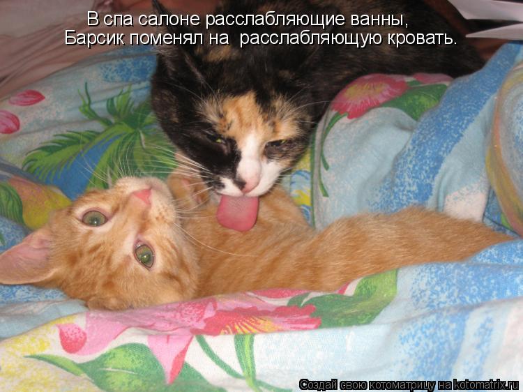 Котоматрица: В спа салоне расслабляющие ванны,  Барсик поменял на  расслабляющую кровать.