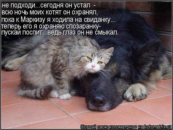 Котоматрица: не подходи...сегодня он устал  - всю ночь моих котят он охранял, пока к Маркизу я ходила на свиданку... теперь его я охраняю спозаранку- пускай