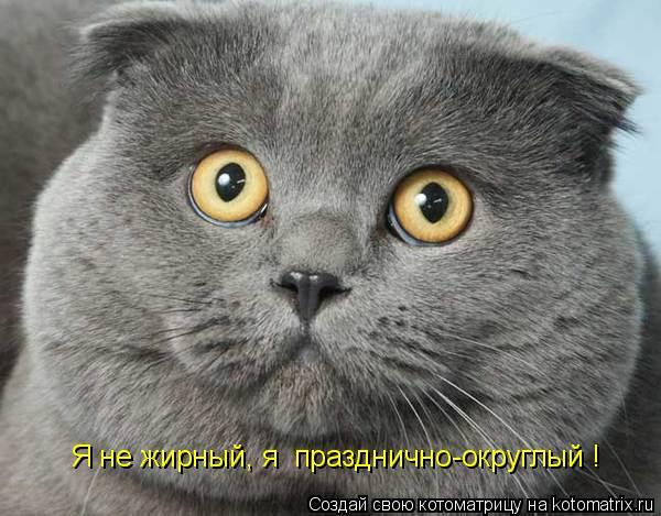 Котоматриця!)))) - Страница 2 857309