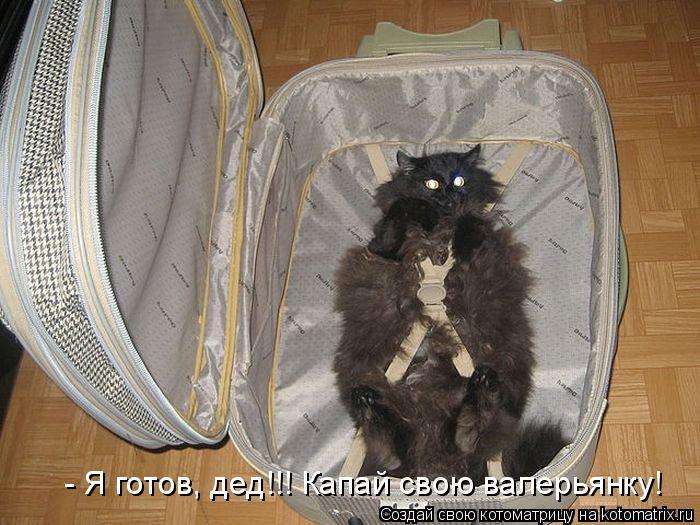 Котоматрица: - Я готов, дед!!! Капай свою валерьянку!