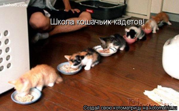 Котоматрица: Школа кошачьих кадетов!