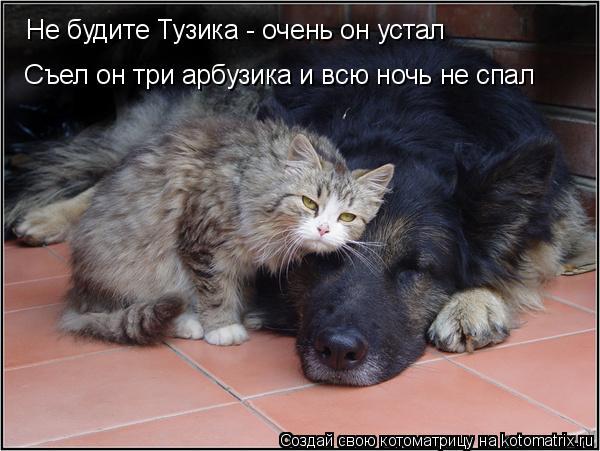 Котоматрица: Не будите Тузика - очень он устал Съел он три арбузика и всю ночь не спал