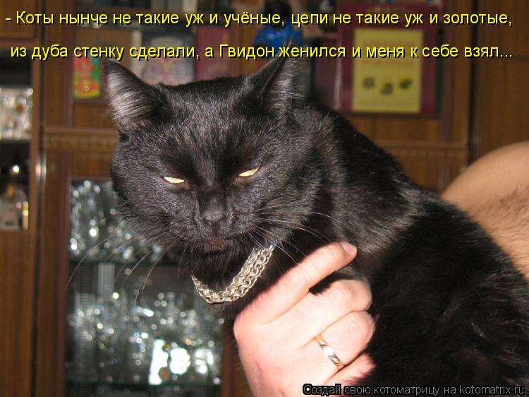 Котоматрица - - Коты нынче не такие уж и учёные, цепи не такие уж и золотые, из дуба