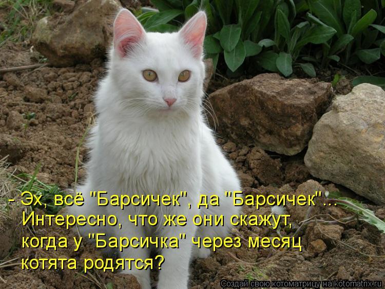 """Котоматрица: - Эх, всё """"Барсичек"""", да """"Барсичек""""... Интересно, что же они скажут, когда у """"Барсичка"""" через месяц котята родятся?"""