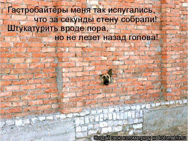 Котоматрица: Гастробайтеры меня так испугались,  что за секунды стену собрали! Штукатурить вроде пора, но не лезет назад голова!