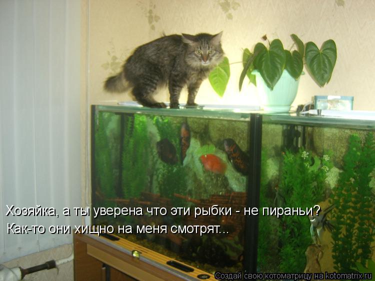 Котоматрица: Хозяйка, а ты уверена что эти рыбки - не пираньи? Как-то они хищно на меня смотрят...