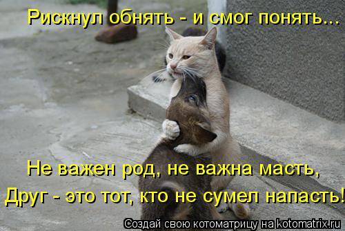Котоматрица: Рискнул обнять - и смог понять... Не важен род, не важна масть, Друг - это тот, кто не сумел напасть!