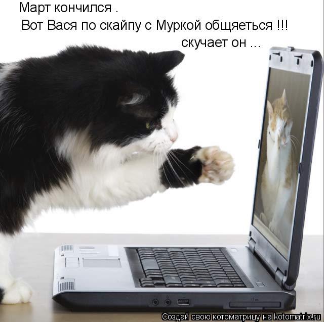 Котоматрица: Март кончился . Вот Вася по скайпу с Муркой общяеться !!! скучает он ...