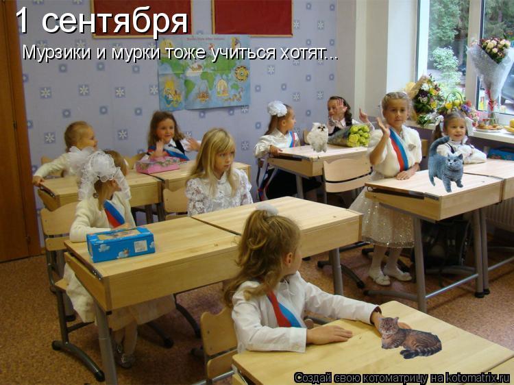 Котоматрица: 1 сентября Мурзики и мурки тоже учиться хотят...