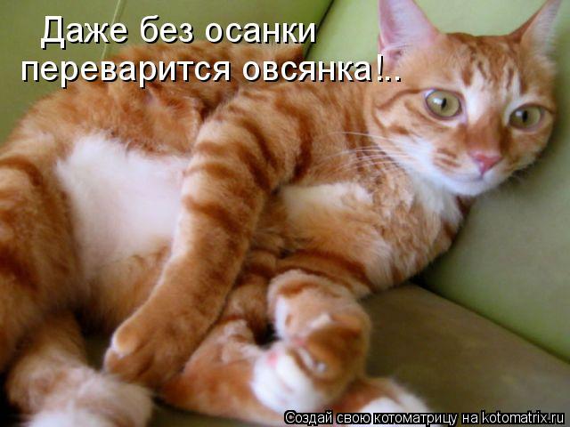 Котоматрица: Даже без осанки переварится овсянка!..