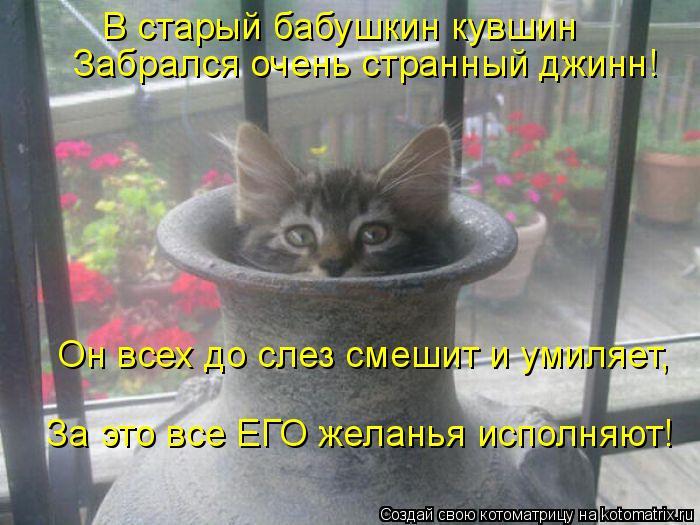 Котоматрица: В старый бабушкин кувшин Забрался очень странный джинн! Он всех до слез смешит и умиляет, За это все ЕГО желанья исполняют!