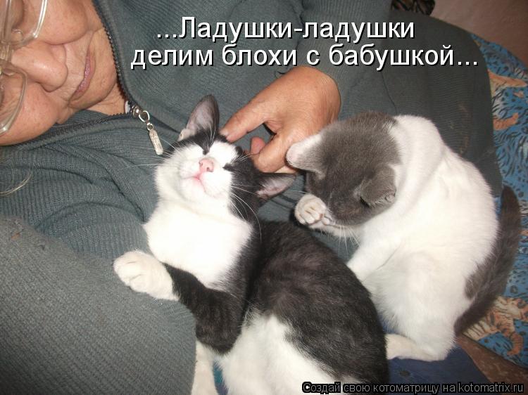 Котоматрица: ...Ладушки-ладушки делим блохи с бабушкой...