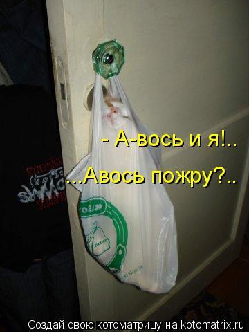Котоматрица: - А-вось и я!.. ...Авось пожру?..