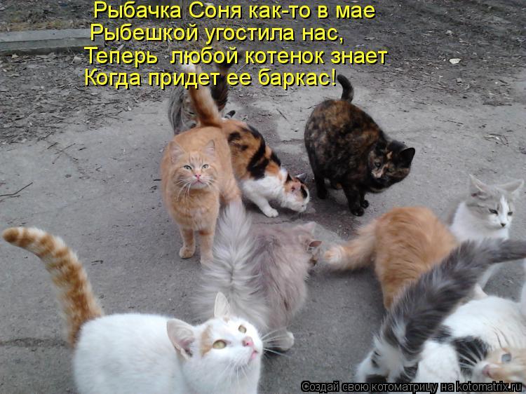 Котоматрица: Рыбачка Соня как-то в мае Рыбешкой угостила нас, Теперь  любой котенок знает Когда придет ее баркас!