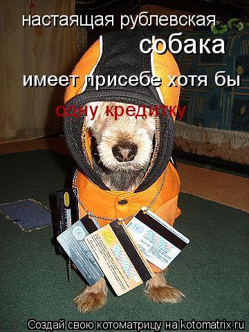 Котоматрица: настаящая рублевская собака имеет присебе хотя бы одну кредитку