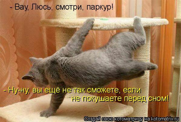 Котоматрица: - Вау, Люсь, смотри, паркур! - Ну-ну, вы ещё не так сможете, если  не покушаете перед сном!