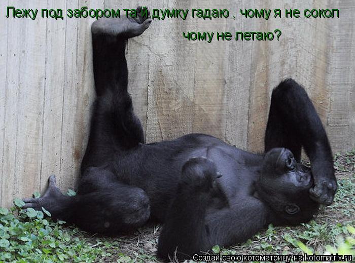 http://kotomatrix.ru/images/lolz/2011/03/21/859750.jpg
