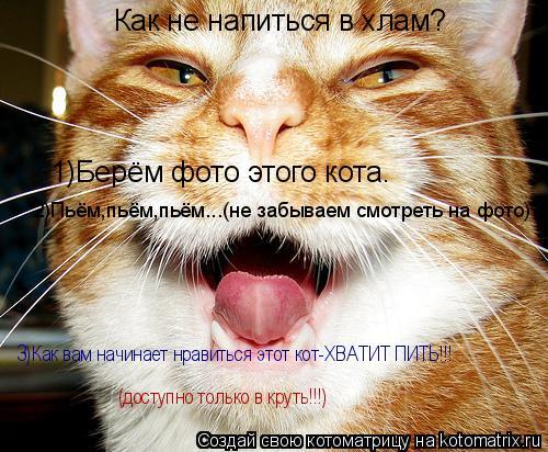 Котоматрица: Как не напиться в хлам? 1)Берём фото этого кота. 2)Пьём,пьём,пьём...(не забываем смотреть на фото) 3)Как вам начинает нравиться этот кот-ХВАТИТ П