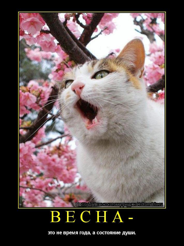Котоматрица: Весна- это не время года, а состояние души.