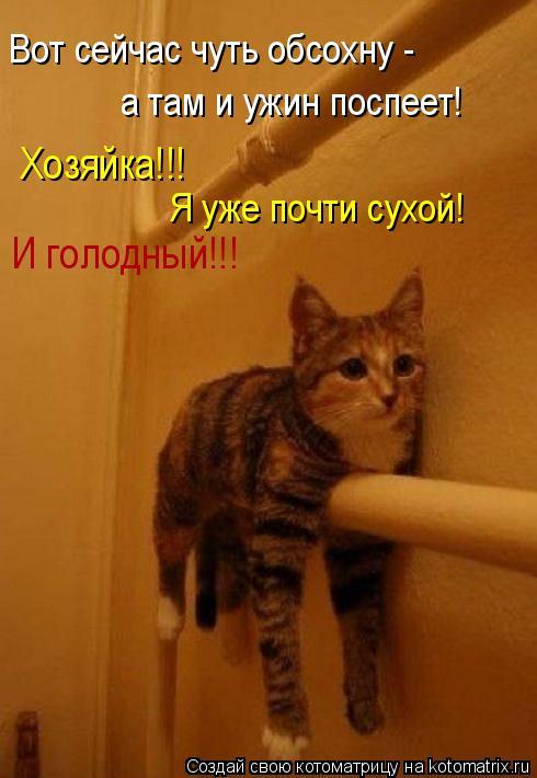 Котоматрица: Вот сейчас чуть обсохну -  а там и ужин поспеет! Хозяйка!!! Я уже почти сухой! И голодный!!!