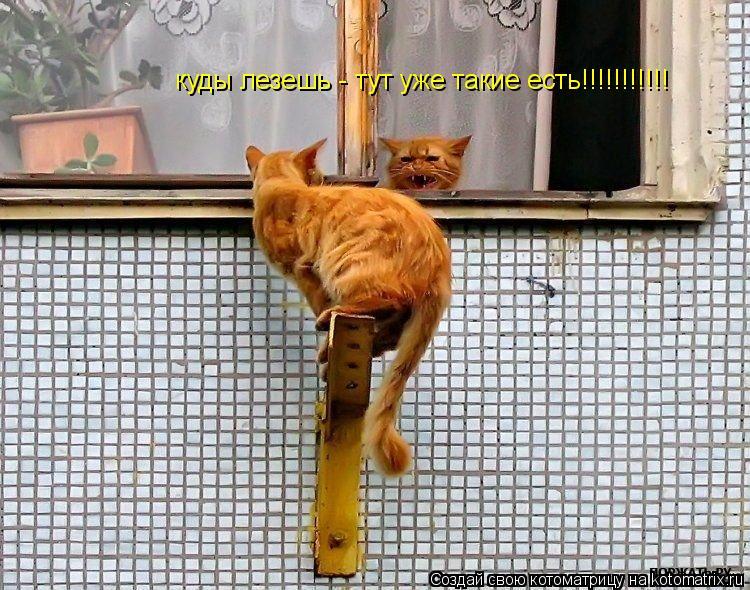 Котоматрица: куды лезешь - тут уже такие есть!!!!!!!!!!!