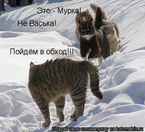 Котоматрица: Это - Мурка! Не Васька! Пойдём в обход!!!