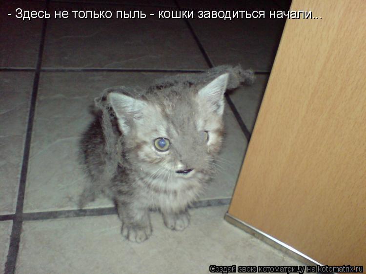 продажу Новосибирская в доме нет кошки долго не живут России был подписан