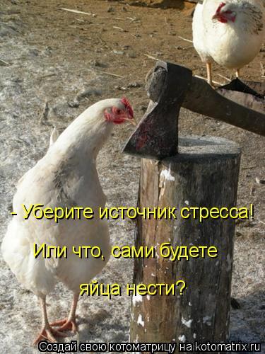 Котоматрица: - Уберите источник стресса! Или что, сами будете  яйца нести?
