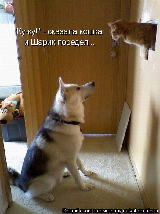 """Котоматрица: """"Ку-ку!"""" - сказала кошка и Шарик поседел..."""