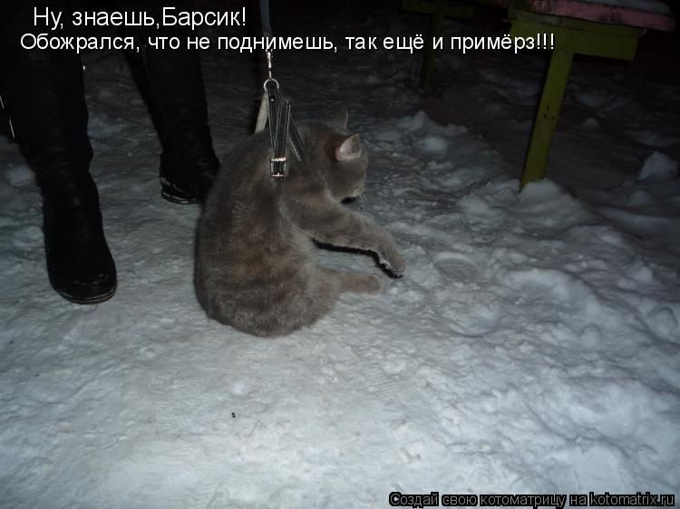 Котоматрица - Ну, знаешь,Барсик!  Обожрался, что не поднимешь, так ещё и примёрз!!!