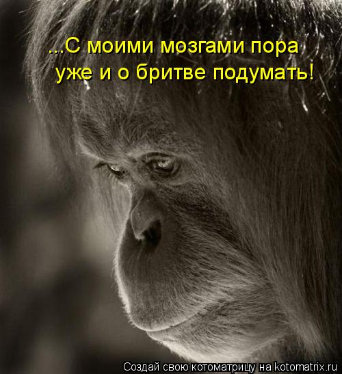 Котоматрица: ...С моими мозгами пора  уже и о бритве подумать!