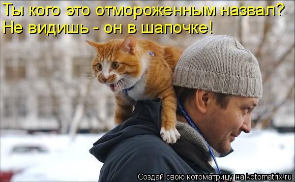 Котоматрица: Ты кого это отмороженным назвал? Не видишь - он в шапочке!