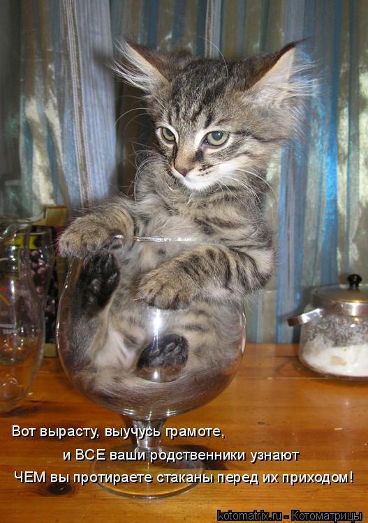 Котоматрица: Вот вырасту, выучусь грамоте,  и ВСЕ ваши родственники узнают  ЧЕМ вы протираете стаканы перед их приходом!