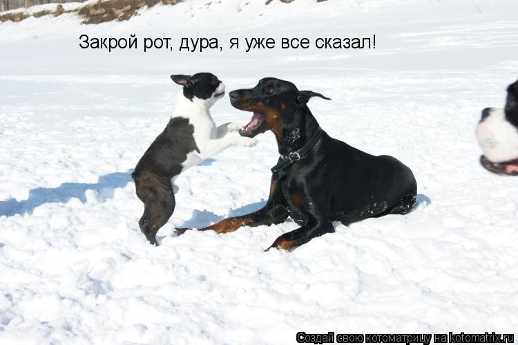 Котоматрица: Закрой рот, дура, я уже все сказал!