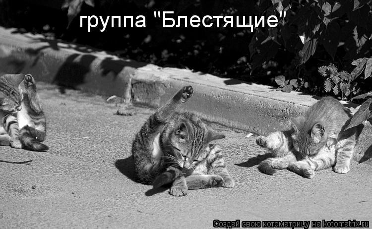 """Котоматрица: группа """"Блестящие"""""""