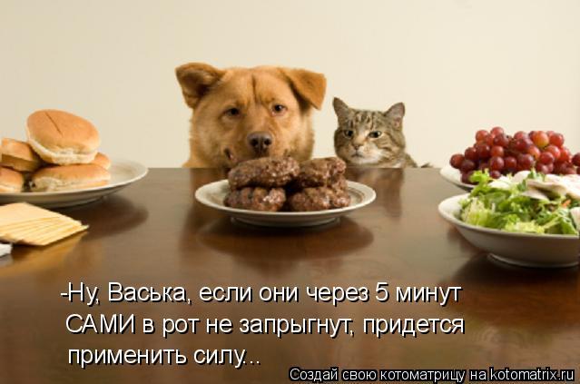 Котоматрица: -Ну, Васька, если они через 5 минут САМИ в рот не запрыгнут, придется применить силу...