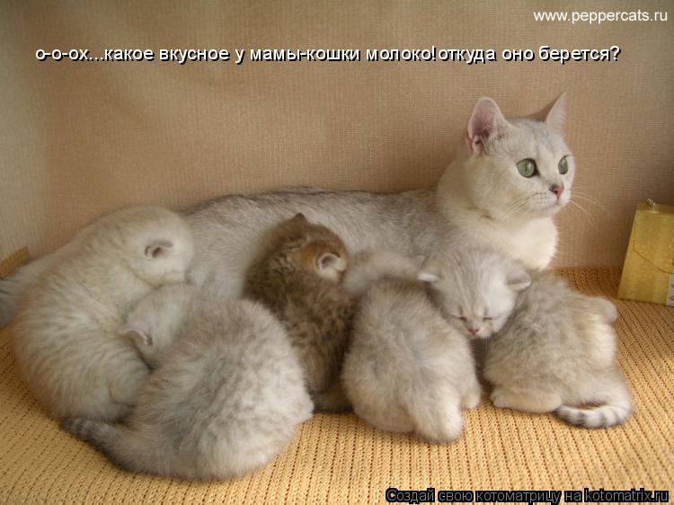 Котоматрица: о-о-ох...какое вкусное у мамы-кошки молоко!откуда оно берется?