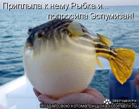 Котоматрица: Приплыла к нему Рыбка и...  попросила Эспумизан!