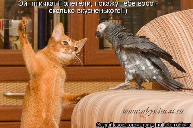 Котоматрица: Эй, птичка! Полетели, покажу тебе вооот  сколько вкусненького!;)