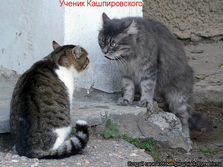 Котоматрица: Ученик Кашпировского