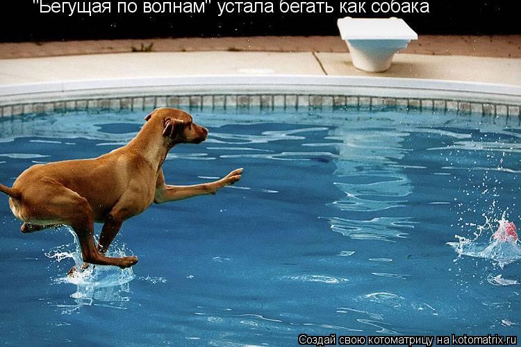 """Котоматрица: """"Бегущая по волнам"""" устала бегать как собака"""