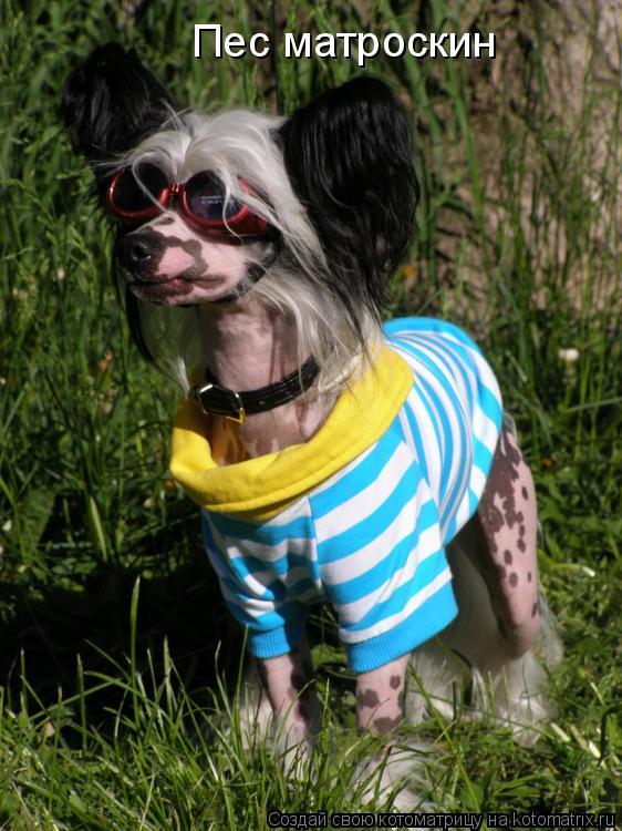 Котоматрица: Пес матроскин