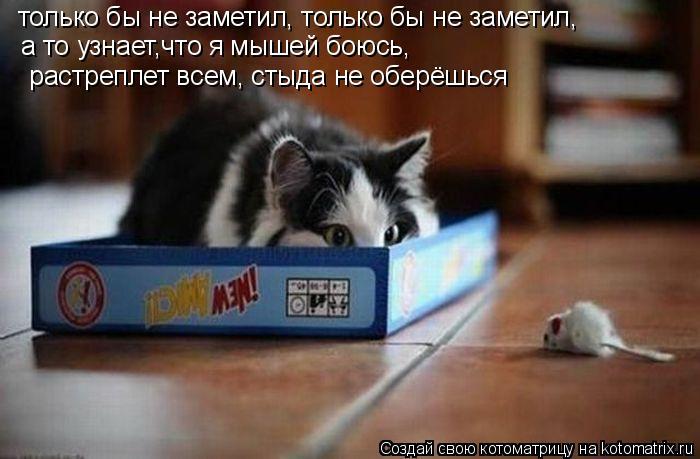 Котоматрица: только бы не заметил, только бы не заметил, а то узнает,что я мышей боюсь,  растреплет всем, стыда не оберёшься