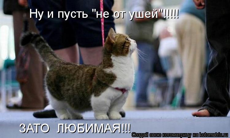 """Котоматрица: Ну и пусть """"не от ушей""""!!!!! ЗАТО  ЛЮБИМАЯ!!!"""
